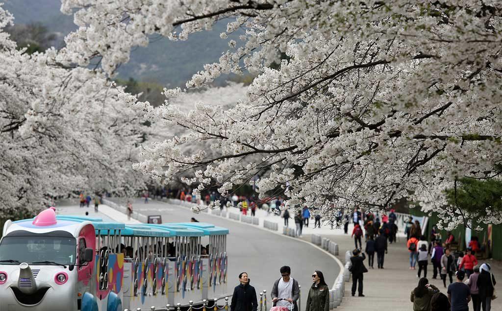 Seoul | Seoul Grand Park