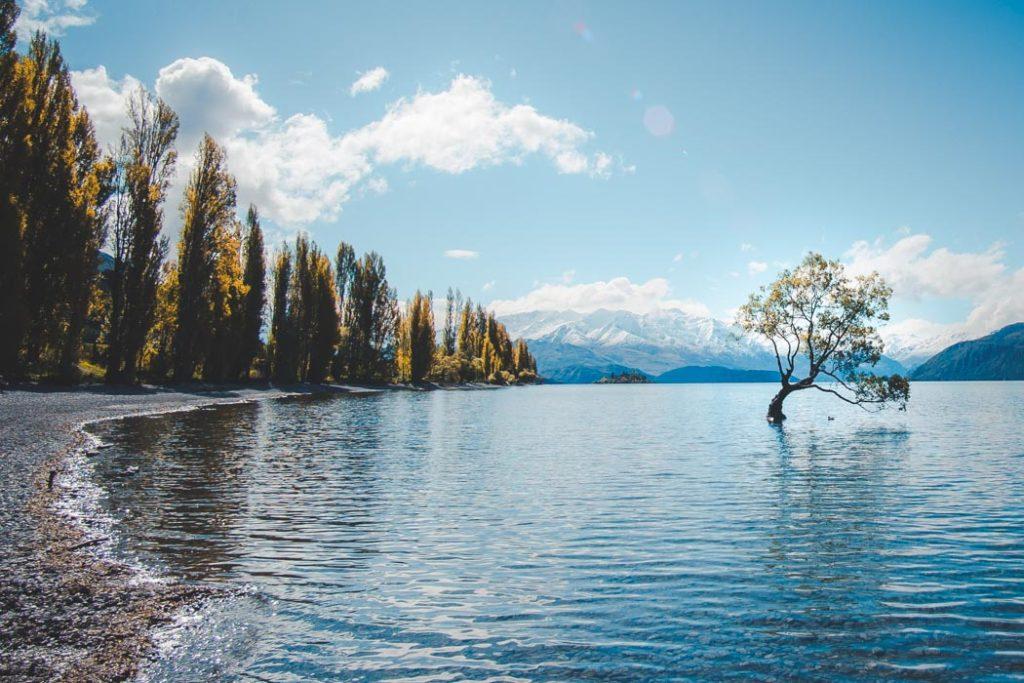 Wanaka Einsamer Baum im Lake Wanaka